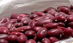 El frejol: una potente semilla que combate la desnutrición