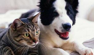 Reino Unido: gobierno protege a mascotas abandonadas