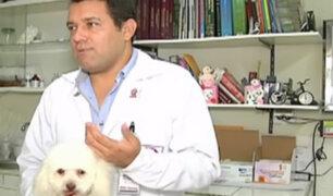 Especialista responde si los rottweilers son realmente peligrosos