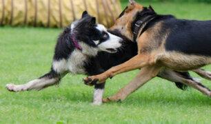 ¿Por qué algunos perros son agresivos? veterinario aclara el tema y brinda recomendaciones