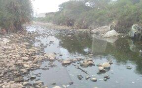 Cientos de peces muertos aparecen en el río Lurín