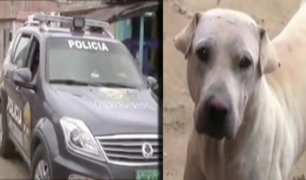 Piura: perro mata a cachorro de cuatro meses
