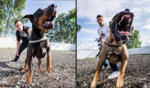 Gran Bretaña: perros para seguridad pueden costar hasta 40 mil dólares