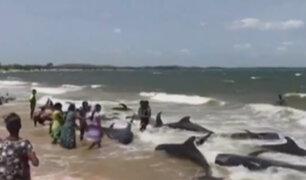 Sri Lanka: ballenas varadas tras el paso del ciclón 'Mora'