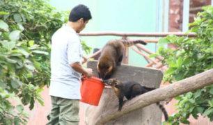 Parque de las Leyendas: primates y felinos entre las especies afectadas por el frío que impera en Lima