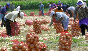 Ministerio de Agricultura ejecuta 25 proyectos de desarrollo agrario