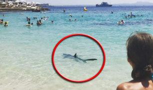 España: tiburón desata pánico entre bañistas en playa de Mallorca