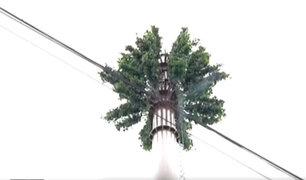 San Borja: antenas de telefonía son camufladas en forma de árboles