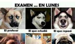 Día del Maestro: Mira los mejores memes que celebran a los 'profes' peruanos