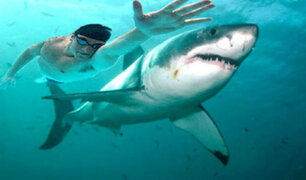Michael Phelps compitió contra un tiburón blanco y perdió por dos segundos