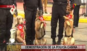 Policía canina presentará curioso espectáculo durante Desfile Militar