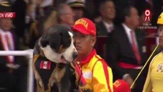 Desfile Militar: perro del presidente Pedro Pablo Kuczynski se lució por segunda vez