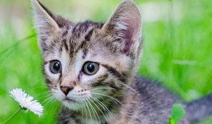 Sí, el día del gato existe y es hoy