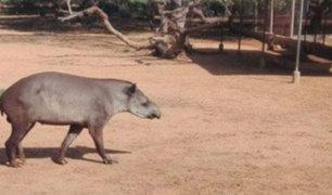 Venezuela: roban animales de zoológicos para comérselos