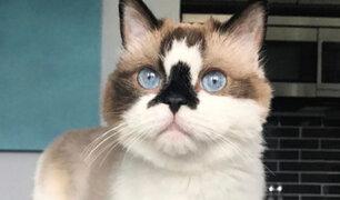 Conozca al gato que revoluciona las redes sociales