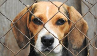 San Isidro: opiniones divididas por ordenanza contra el ruido y maltrato animal