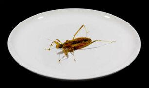 Un evento gastronómico con platillos de insectos toma por asalto Nueva York