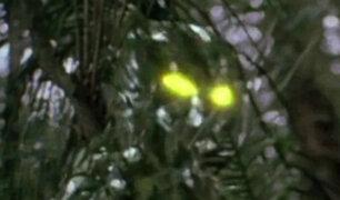 Misteriosas apariciones: cámaras registran impresionantes imágenes