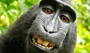 EEUU: fotógrafo gana derechos de 'selfie' de mono macaco