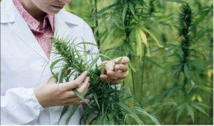 Comisión de Defensa aprobó proyecto de ley para legalizar uso medicinal de la marihuana