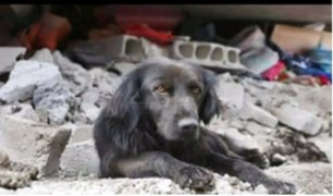 Rescatistas logran salvar a animales tras terremoto en México