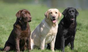 ¿Un traductor para perros está por salir al mercado?
