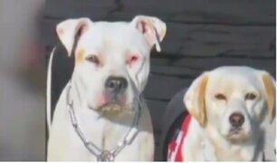 México: perros rescatistas continúan salvando la vida de decenas de personas