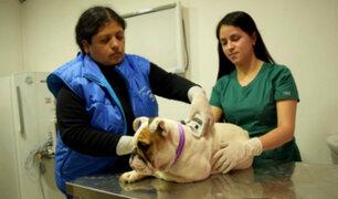 San Miguel: implantarán chip para identificar a mascotas del distrito