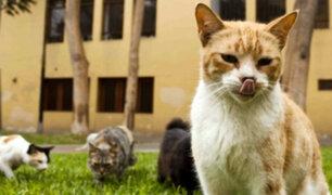 SJL: vecinos indignados por matanza de gatos en parque