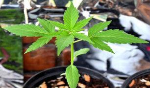 Comisión de Salud suspende debate sobre legalización del cannabis medicial
