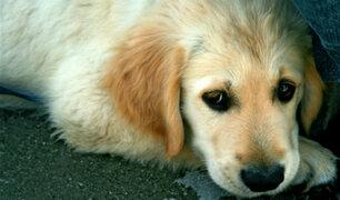 EEUU: mujer es captada golpeando a indefenso perro
