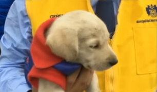 Cercado de Lima: animales son rescatados de vendedores informales