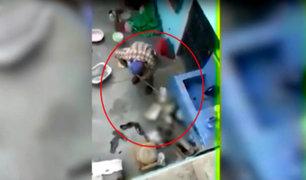 Comas: anciano es captado golpeando brutalmente a gato