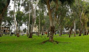 San Isidro acusa a Lima de querer talar más de 100 árboles