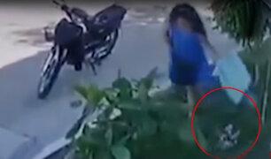 Pucallpa: mujer es captada abandonando a cachorros en plena calle
