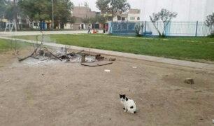 Maltrato animal: Municipalidad de Ate niega responsabilidad en matanza de gatos