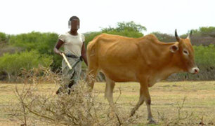 En Tanzania muchas niñas son intercambiadas por ganado