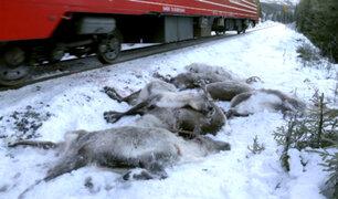 Noruega: más de 100 renos fueron atropellados por trenes