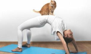 Yoga con gatos: una novedosa terapia para reducir el estrés
