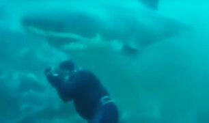 Buzo se salva de ser devorado por un tiburón blanco en Sudáfrica