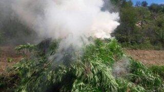 Policía incinera más de 11 mil plantones de marihuana en Huarmey