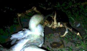 YouTube: Cangrejo mata una gran ave y se la come ante la atónita mirada de un científico [VIDEO]
