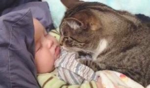 Los gatos demuestran ser buenos cuidadores de bebes