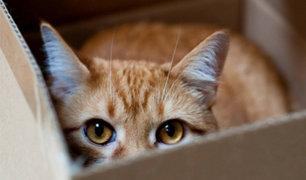 Lince: denuncian matanza masiva de gatos en parque Castilla