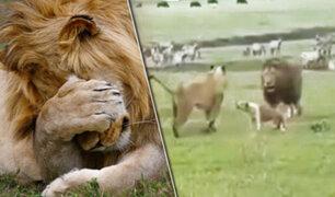 Tanzania: un valiente perro ahuyenta a dos leones