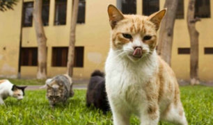 Vecinos denuncian que municipio habría ordenado matanza de gatos en Lince