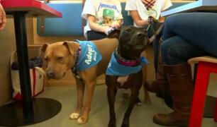 Chile: perros ayudan a niños autistas a ir al dentista