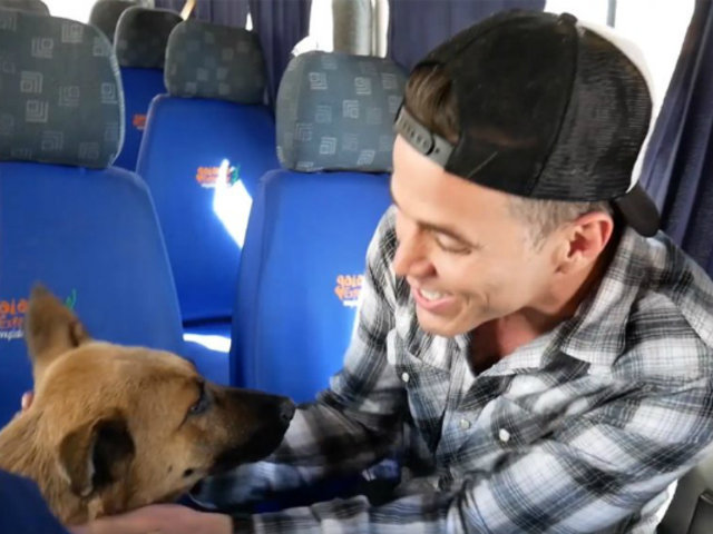 Integrante de Jackass adopta perrita peruana