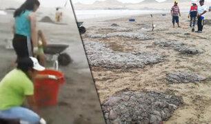 Moquegua: el mar varó 10 toneladas de malaguas en playa de Ilo