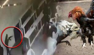 México: balacera en club de peleas de gallos deja seis muertos